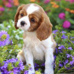 """""""Jag trivs bättre här där jag kan ha det lugnt och skönt. Och lukta på blommorna."""""""