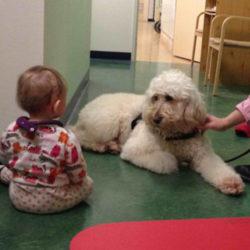 Akademiska barnsjukhuset får vårdhund