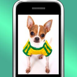 3418605-cute-chihuahua-dog-photo-on-mobile-phone
