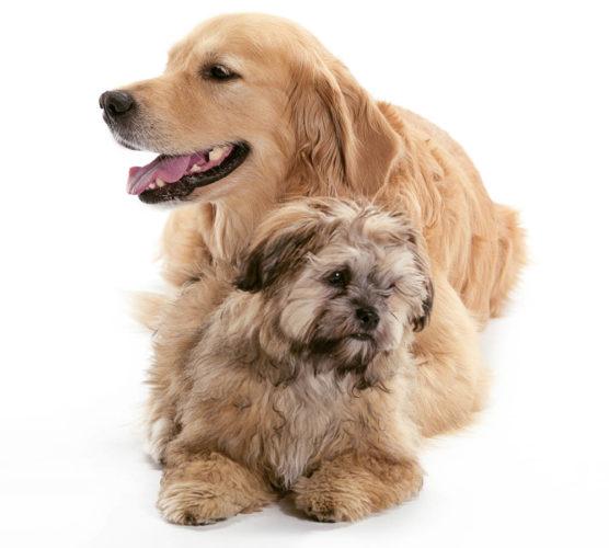 Förebygg och lindra artros hos din hund