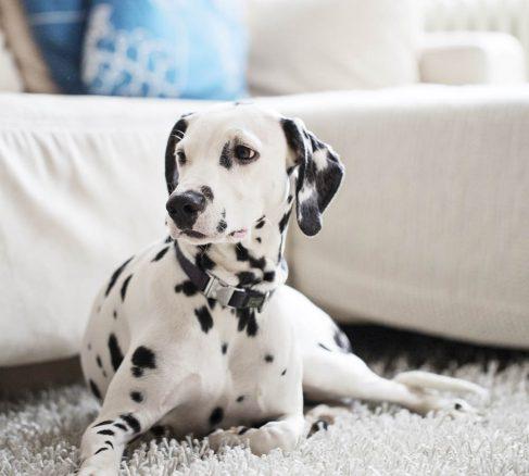 10 må-bra-tips för dig med hund