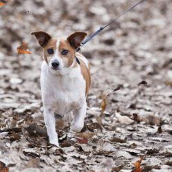 dog_autumn_walk
