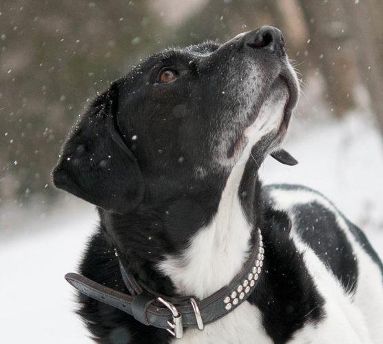5 råd som skyddar din hund mot kylan