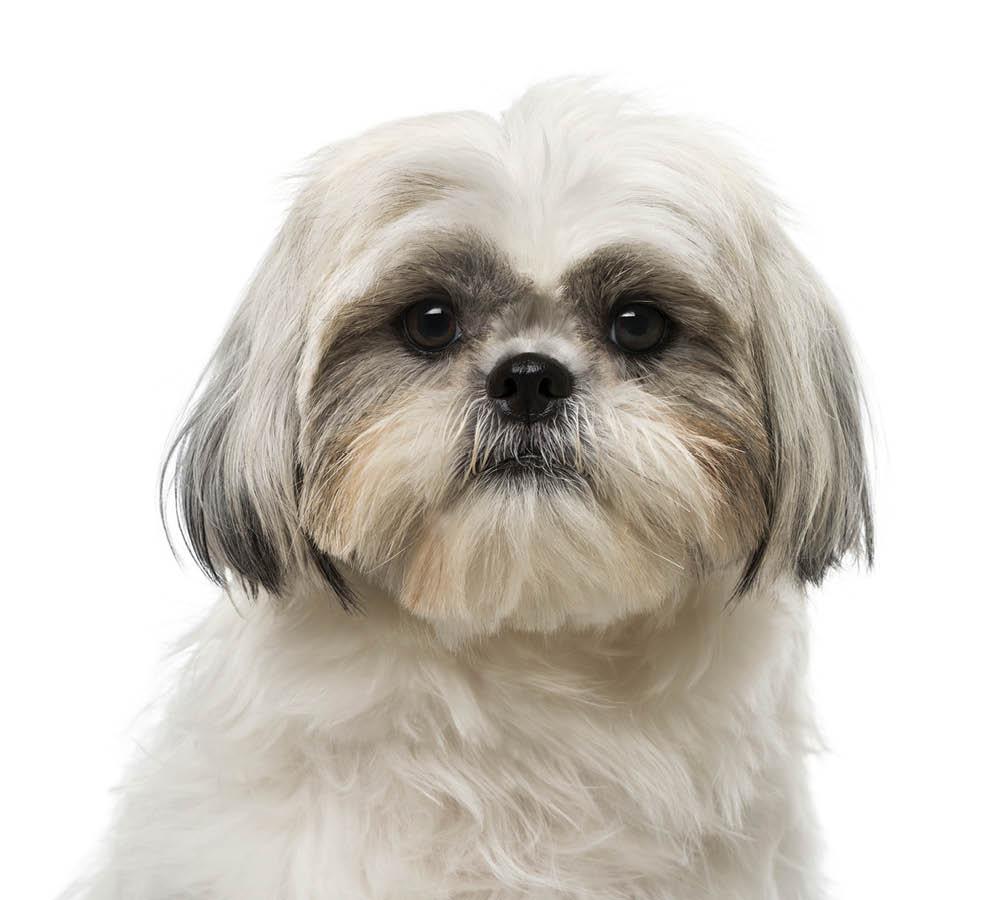 härliga hund
