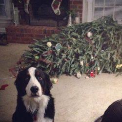 7 hundar som förstörde julen