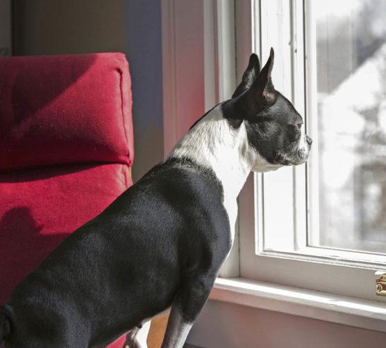 Skulle du hindra inbrottstjuvar med din hund?