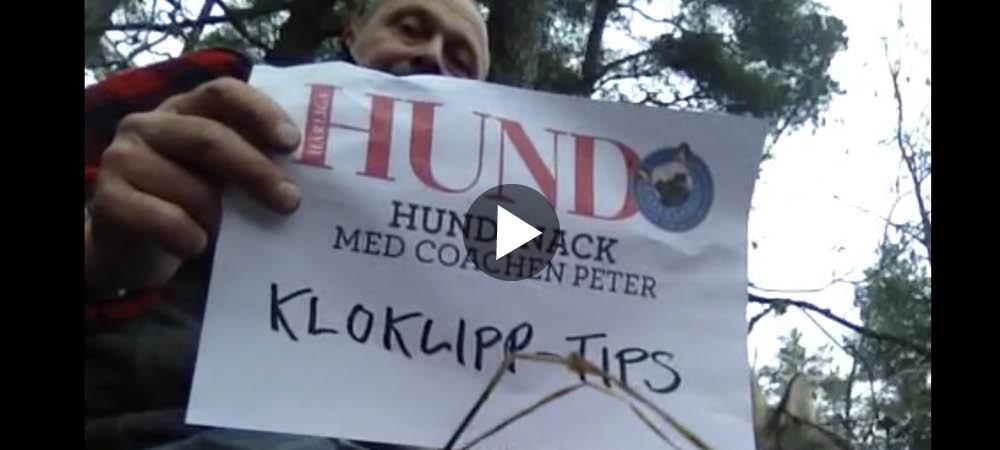 Hundsnack med Peter Ekeström: Problem med att klippa klorna?