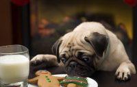 Julens no-no-lista för din hund