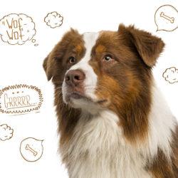 Lär dig tyda hundens skall