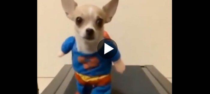 Här kommer Superchi till vår julräddning!