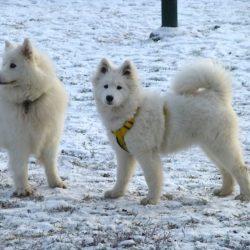 Magsjuka, snö och krogbesök