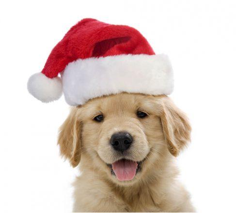 Vinnare Julkalendern
