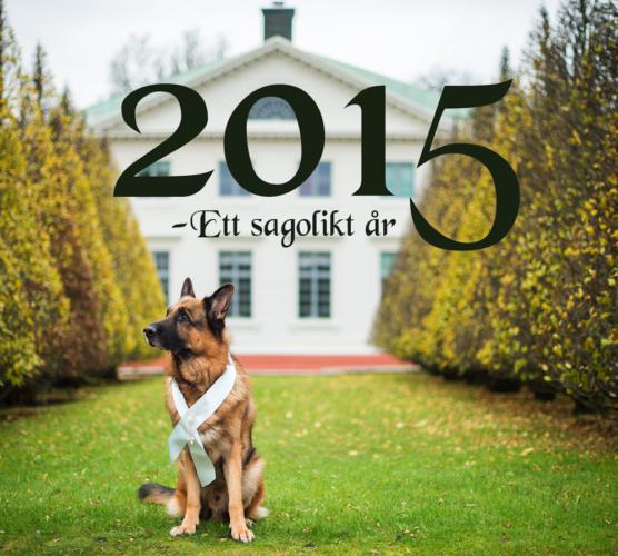 Köp en kalender och stötta en hund
