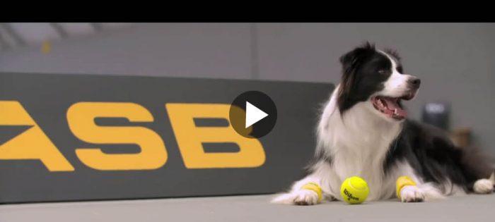 Världens bästa tennisboll-killar?