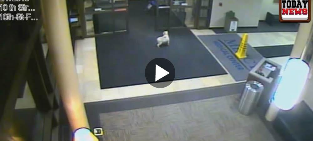 Hunden Sissy rymde till sjukhuset för att leta upp matte