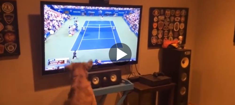 Åh, äntligen blir det tennis på TV! Hunden kan inte få nog