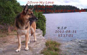 Zorro My Love RIP 2012