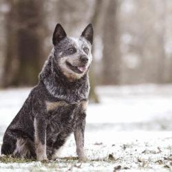 9 lätta hälsoråd för dig & din hund