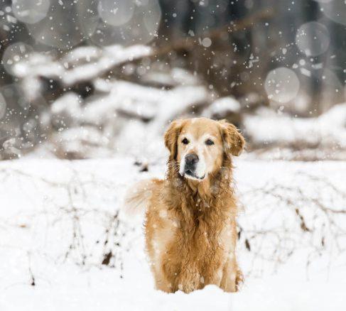 Rätt hjälp räddar hundar med ryggskada