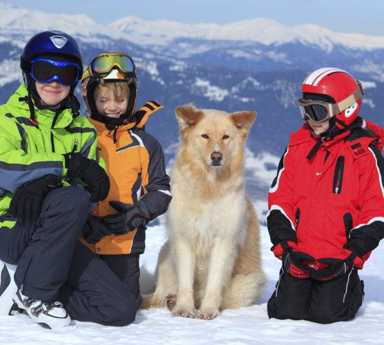 Får hunden hänga med på sportlovet?