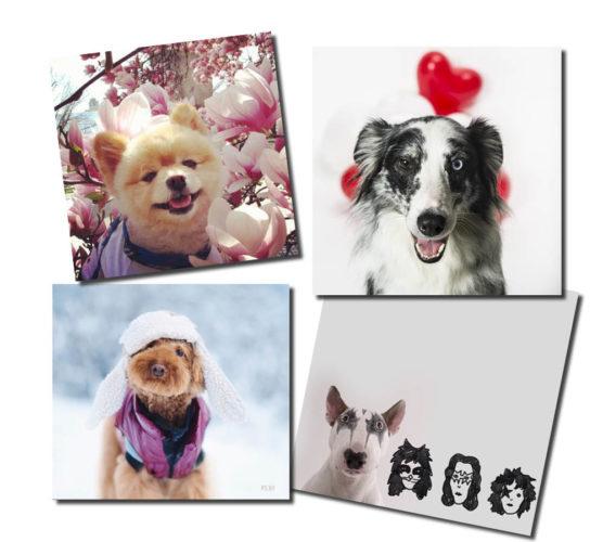 10 bedårande instagramhundar ...