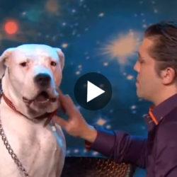Film_hund_sjunger