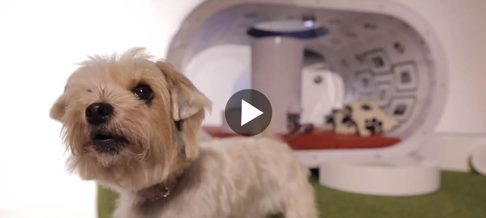Framtidens hundkoja?
