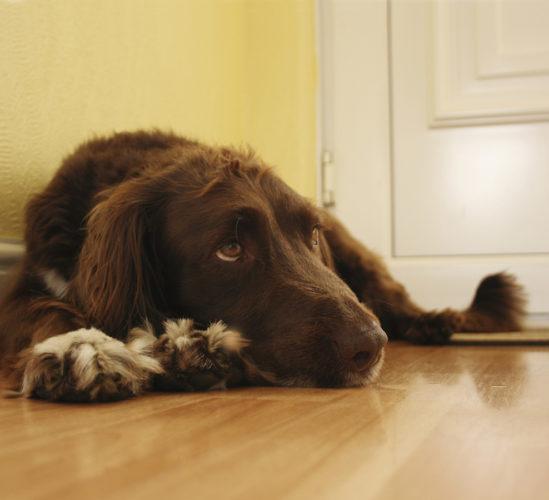 30 hundar döda i mystisk sjukdom