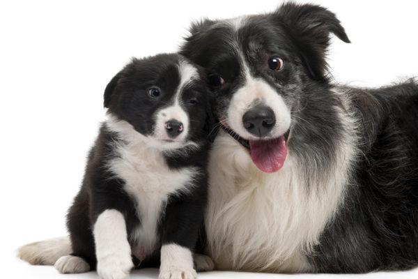 5 inspirerande Instagram-konton för hundälskare