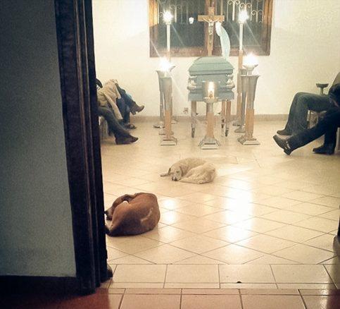 Hundar på begravningen