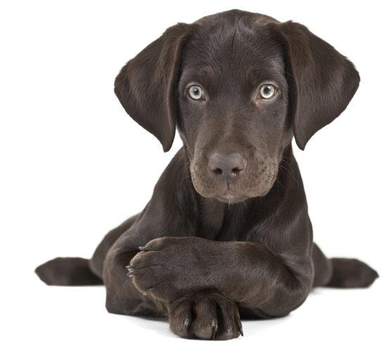 Vanligaste hundnamnen just nu