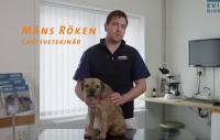 Film: Om hunden blir ormbiten