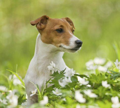 Tål din hund pollen?