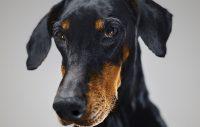 Kan hundar bli svartsjuka? Såklart!