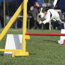 Nu är det klart – agility är en sport!