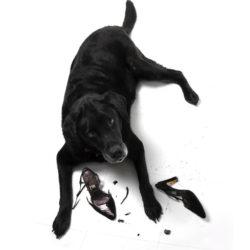 Det finns knep att ta till om den vuxna hunden börjar bete sig som en valp igen och sätter tänderna i det mesta.
