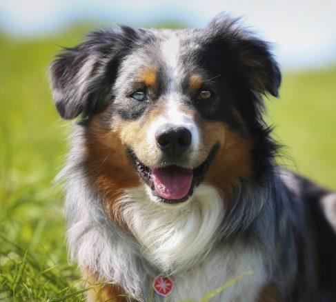 Ge din gamla  hund ett rikt liv