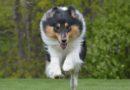 Sommarens kalender för alla hundintresserade