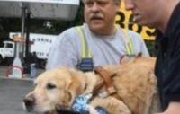 Ledarhunden offrade sig själv för att rädda matte