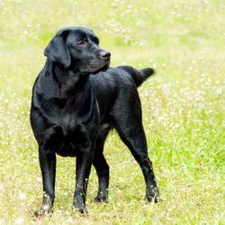 8 tips när din hund har tråkigt
