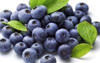 10 frukter och bär hunden kan äta