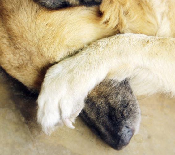 Här är de tio smartaste hundraserna