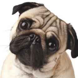 Se din hund  i ögonen