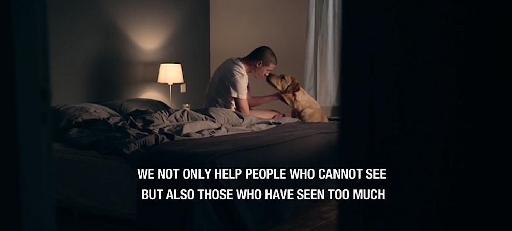 FILM: Arbetande hjältar = servicehundar