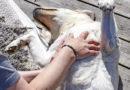 Lär dig massera din hund – 5 grundgrepp