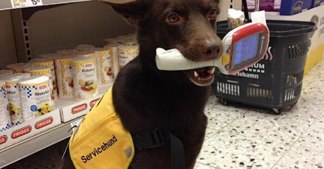 servicehund_lovikka-handlar-02