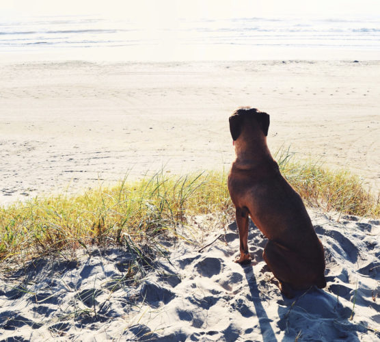 Granska hundens sommarboende