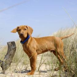 Hundhälsa i sommar