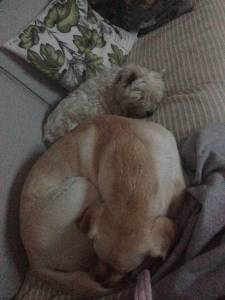 Vi kan vara kompisar också. Det är vi för det mesta. Då kan vi sova bredvid varandra.