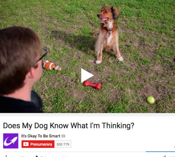 Hundar & människor